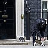 القط لاري يحافظ على منصبه في شارع 10 داوننغ ستريت