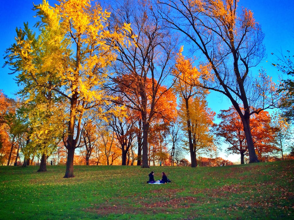 Picnic in New York City's Central Park