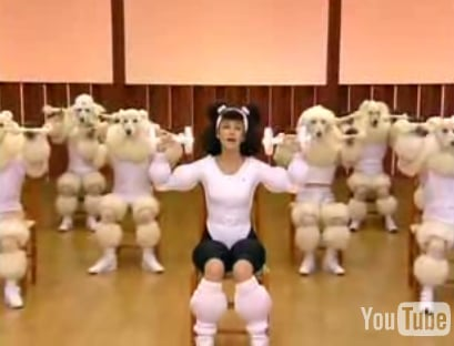 Japanese Poodle Aerobics