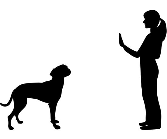 Dog Training Terms Command