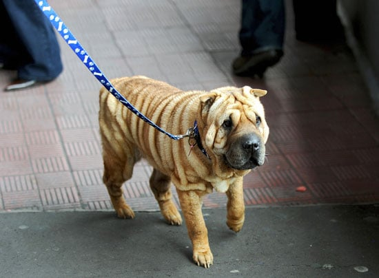 Guess What Breed?