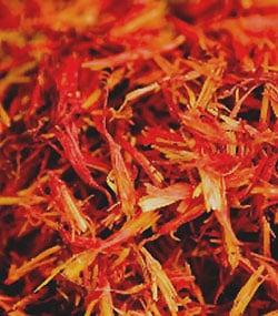 Tibetan Chrysanthemum