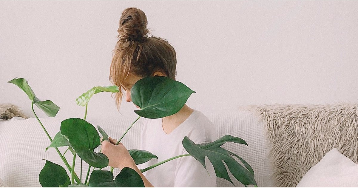 The Best Indoor Plants That Can Help You Avoid Getting Sick This Flu Season