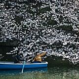 Japan Cherry Blossom Photos 2018