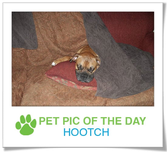 Pet Pics on PetSugar 2009-02-18 09:30:32