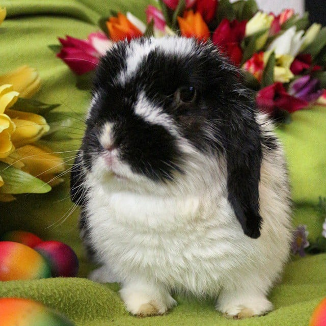 Skip the Easter Chocolate and Feast Your Eyes on Cute Bunnies Instead