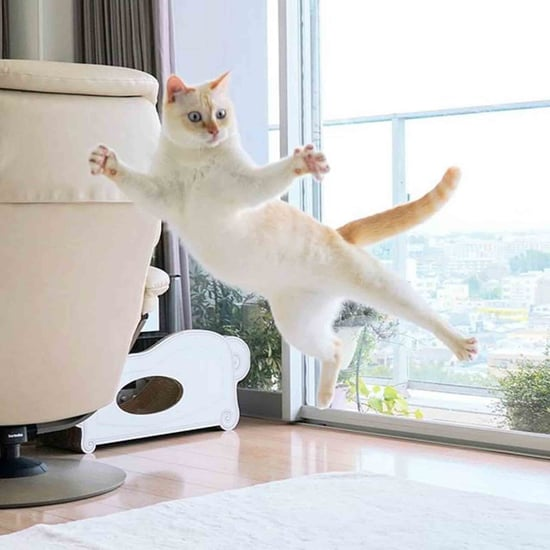 Photos of Cats Jumping