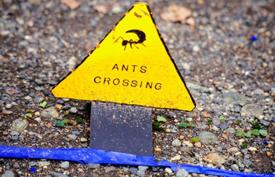 I Need Your Help . . . Ant Invasion!