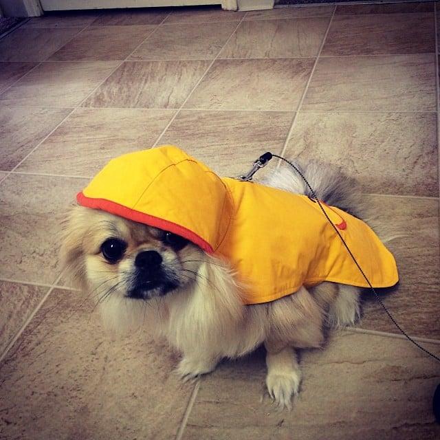 Miserable Pup