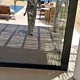 Gabrielle Union's Brown Solid & Striped Bikini in Greece
