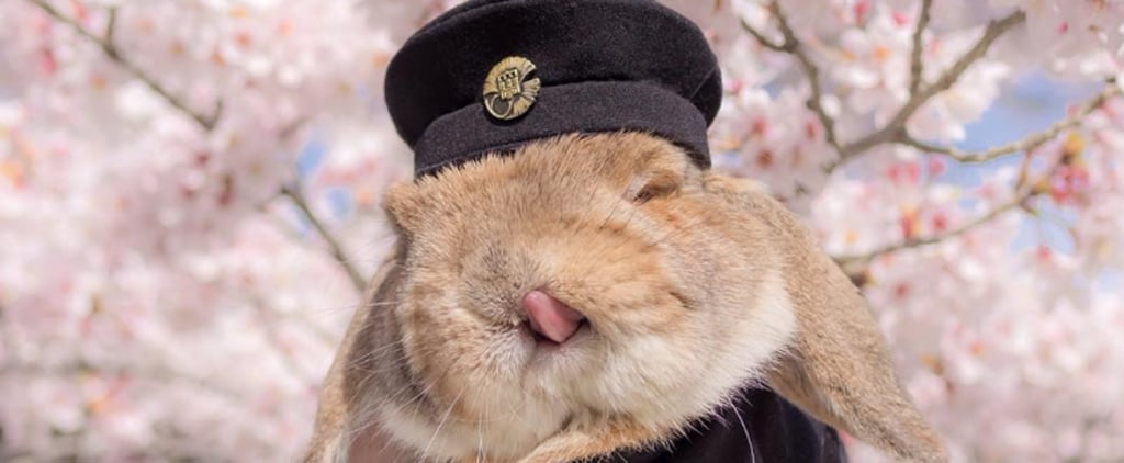 This Adorable Bunny Dresses Better Than You Could Ever Hope To