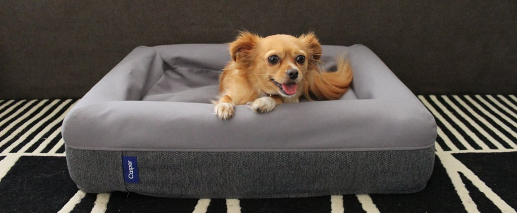 My Pets Sleep on $125 Beds, and It's Totally Worth It