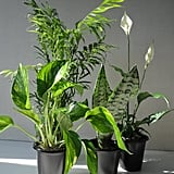 Four Plant Collection