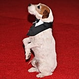 Uggie stood at attention!