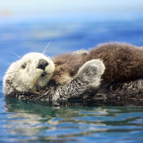 J.K. Rowling Tweet Asks For Pictures of Otters