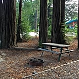 If you want the ultimate redwood experience, why not take reconnecting with nature one step further and camp among these towering tall trees? Sound enticing? Then make sure to check out Giant Redwoods RV & Camp. Nestled in the small town of Myers Flat, this campground not only provides stunning views, but it's also conveniently located right off the Avenue of the Giants.