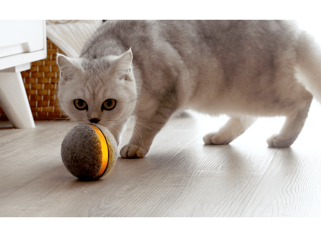 This Interactive Ball Means Your Pet Can Play Fetch When You're Out, and OMG