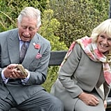 Charles and Camilla couldn't keep a straight face when a bee flew up the prince's sleeve in New Zealand in November 2015.