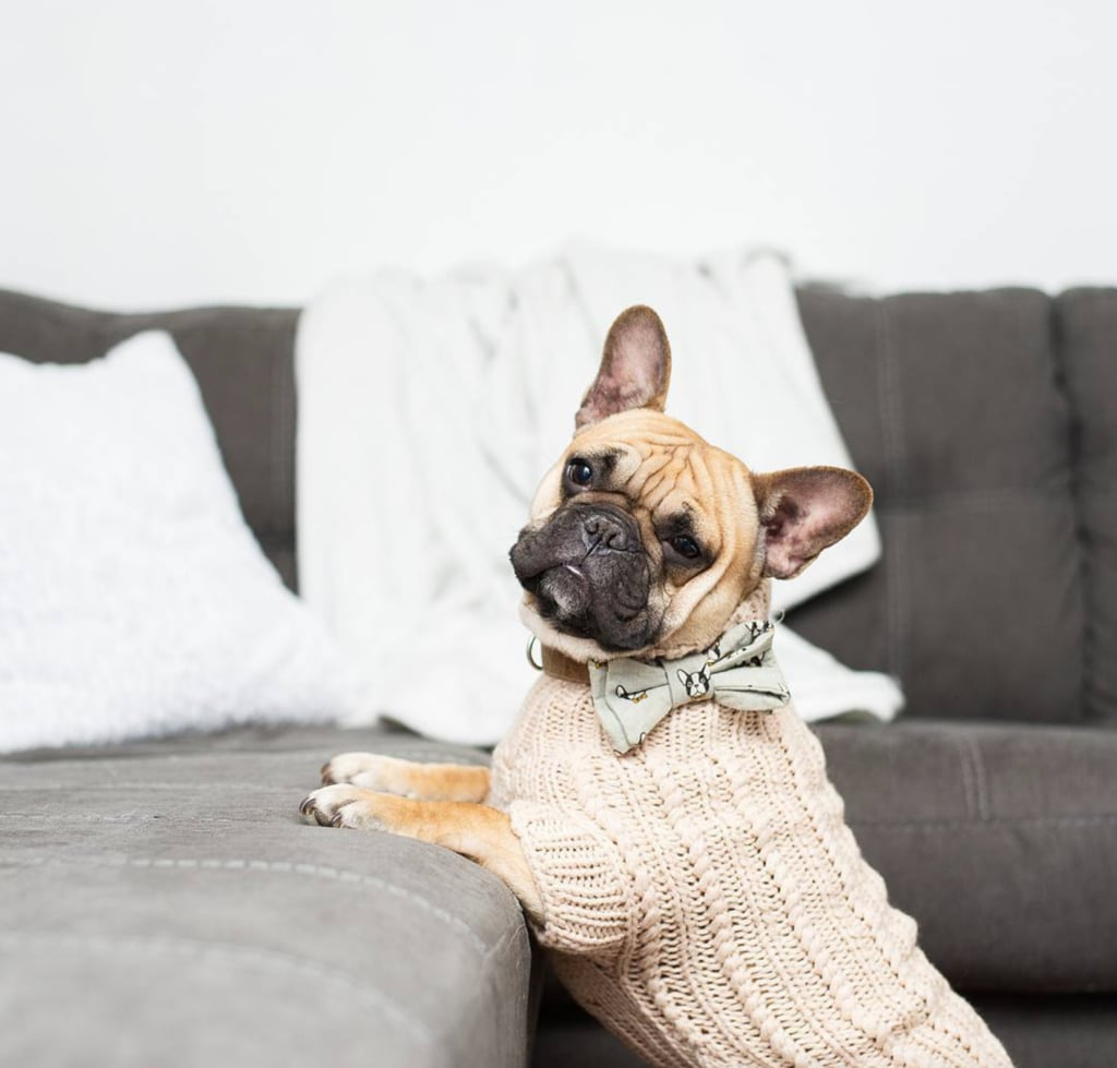 Sebastian Says Merino Wool Cable Knit Dog Sweater, $69.95