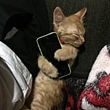 This kitty that's so attached to technology