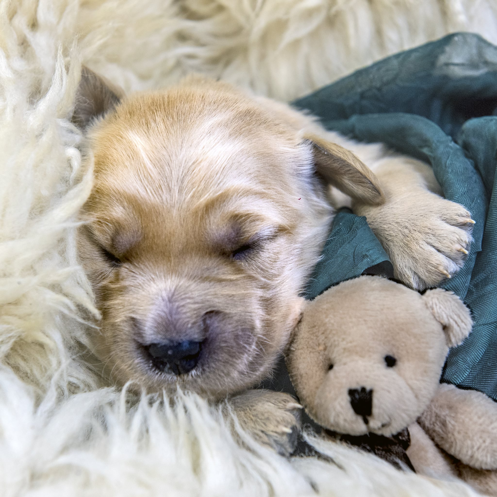 Everything You Need To Buy For A New Puppy Popsugar Australia Pets