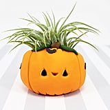 Jack-O'-Lantern Pumpkin Air Plant Holder
