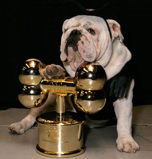 And the 2008 Worldwide Fido Award Goes To . . .
