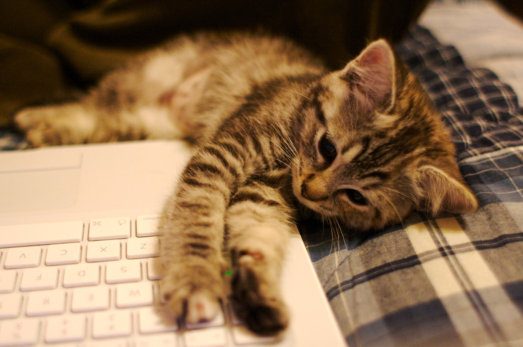 Typing up a manifesto can sure wear a cat out! Source: Flickr user Ryan Forsythe