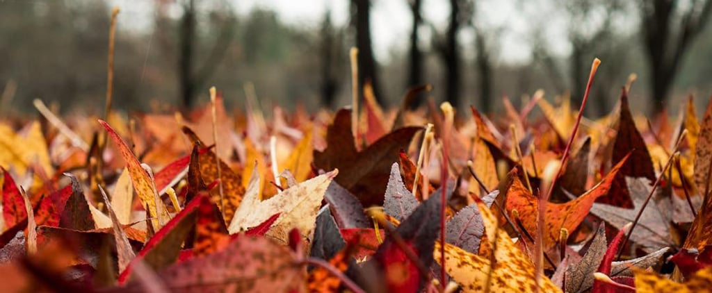 24 Reasons the Season of Fall Fills Your Heart With Joy