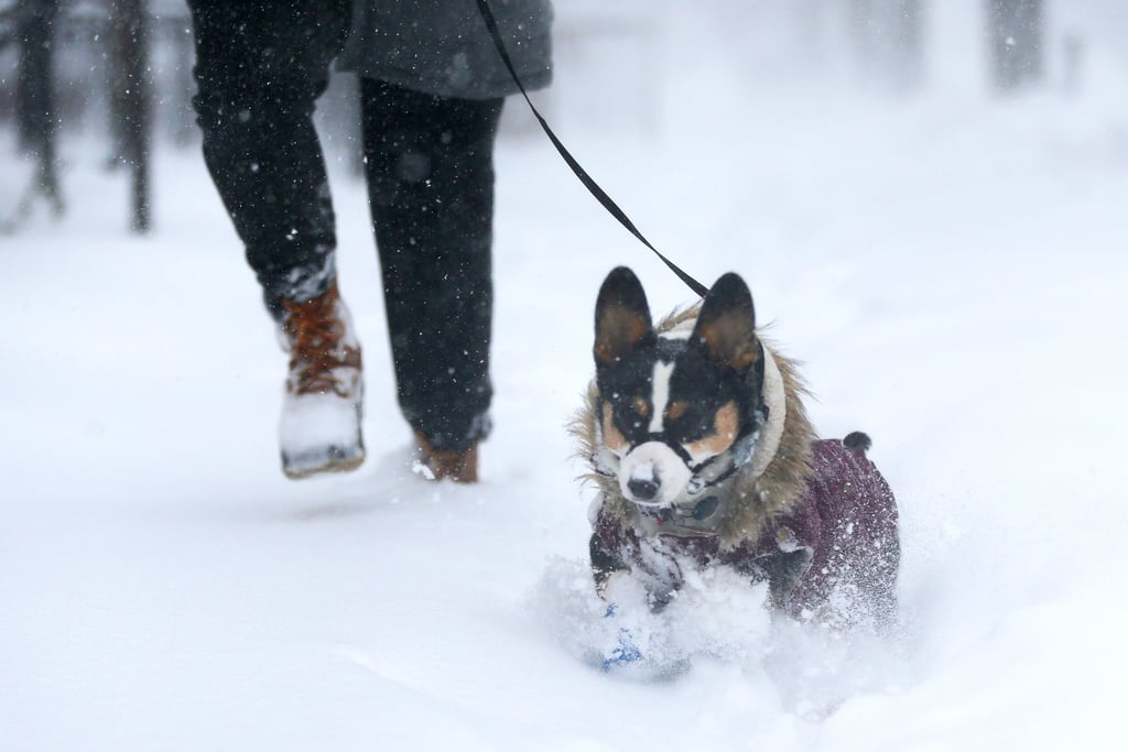 Best Snow, Bomb Cyclone GIFs According to GIPHY January 2018