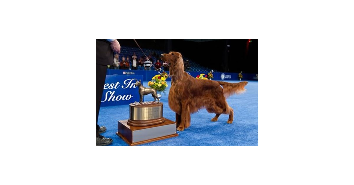 Who Won The Dog Show On Thanksgiving