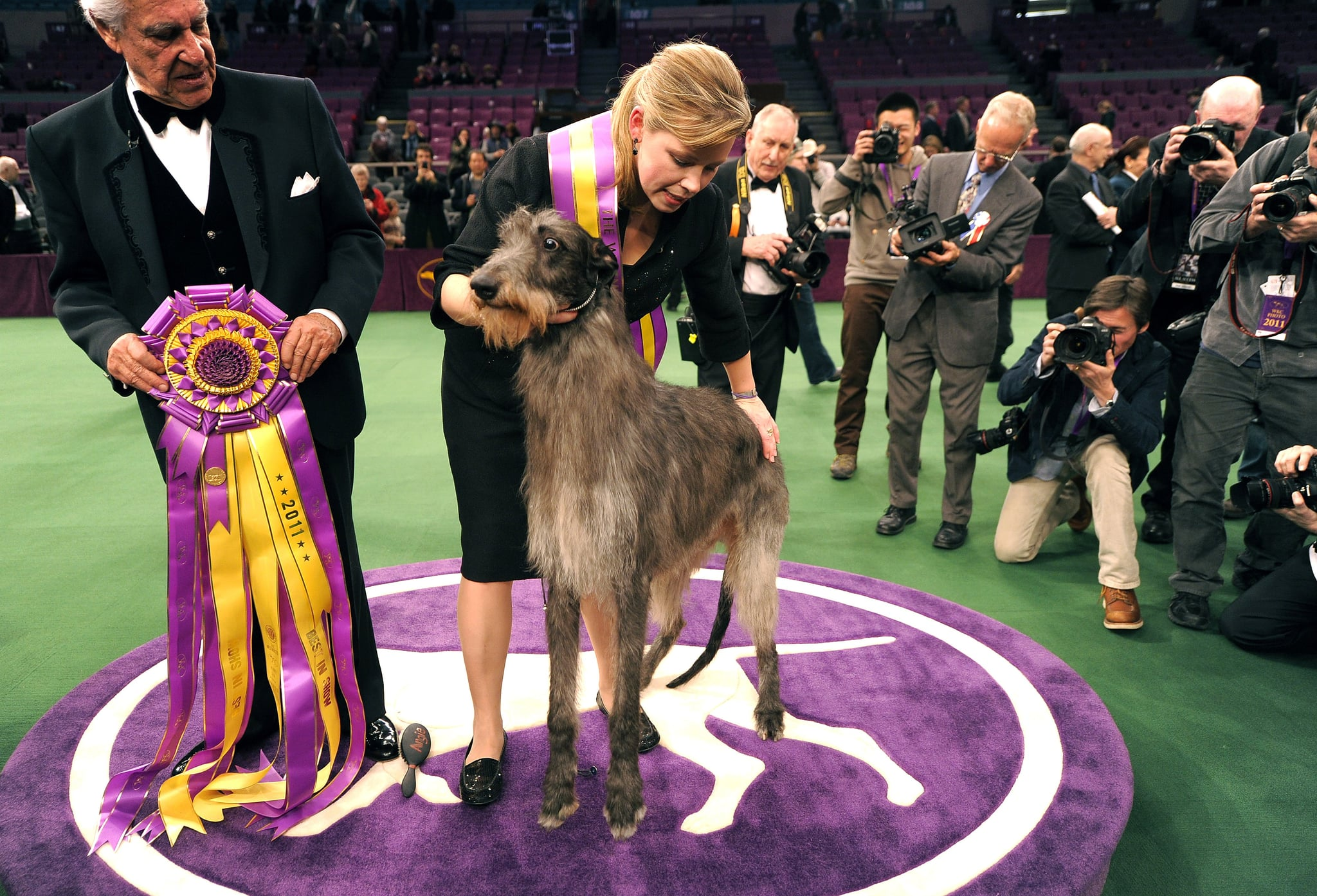 GCH Foxcliffe Hickory Wind, a Scottish deerhound, was 2011's best in show winner.