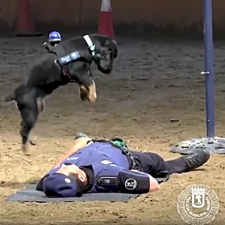 Police Dog Performs CPR on Lifeless Officer