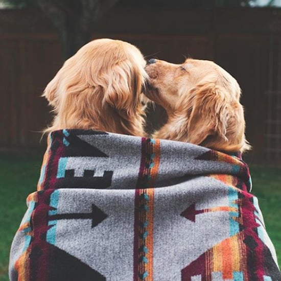 Photos of 2 Golden Retriever Best Friends