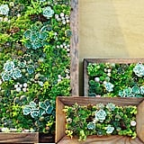 Make your own living succulent art. Source: Sunset Magazine