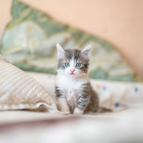 Cute Photos of Cats and Kittens