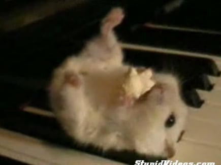 Hamster Playing The Piano
