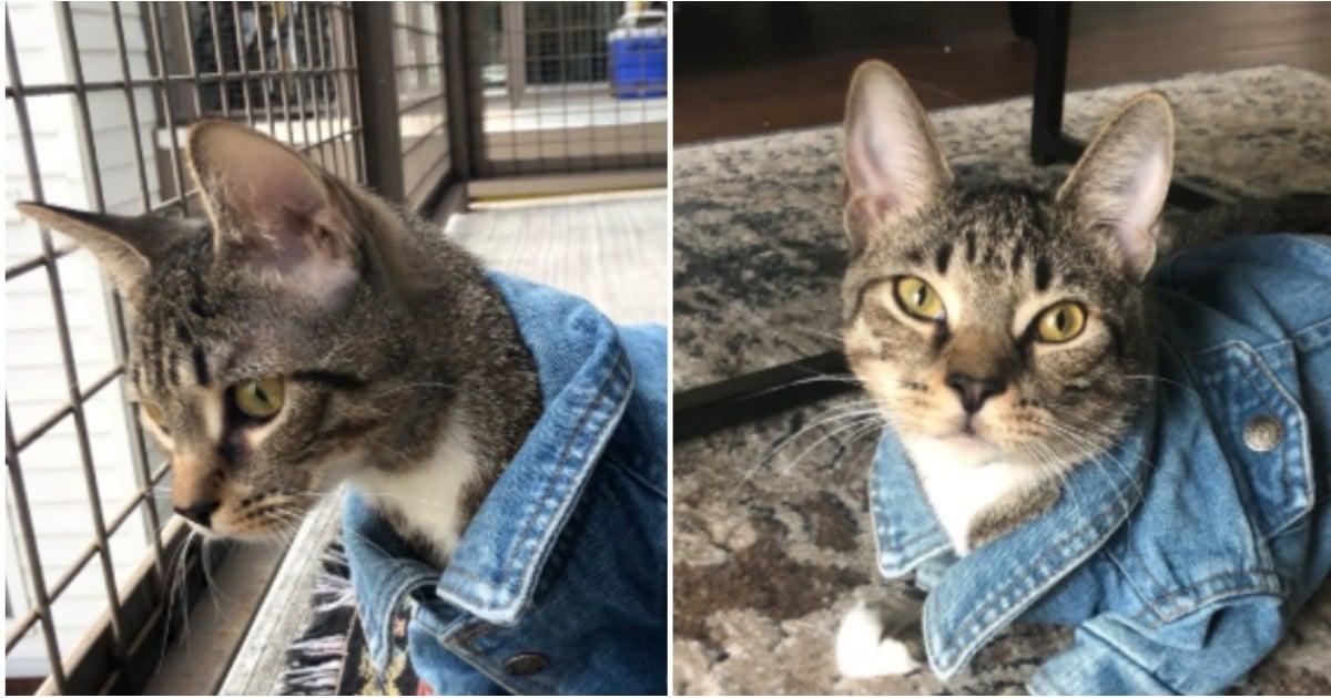 Cat Wears Jean Jacket In Viral Tweet Popsugar Family