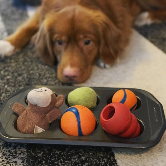 How Do I Play the Muffin Tin Game With My Dog?