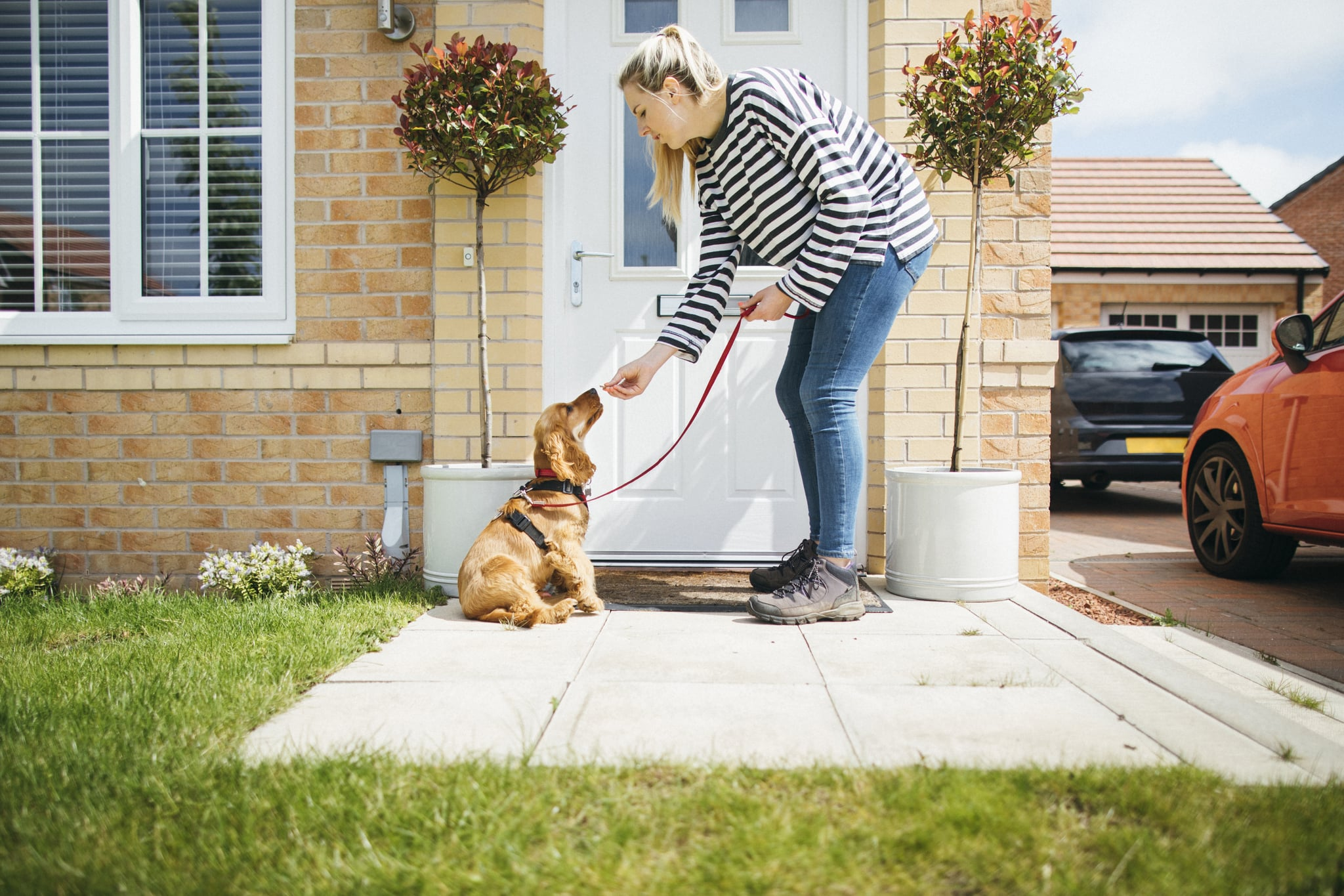 Some Helpful Ideas For Training Your Dog
