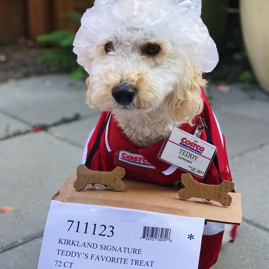 Goldendoodle Dressed as Costco Worker For Halloween Photo
