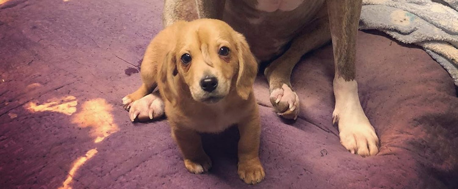 Meet Narwhal, the Adorable Rescue Puppy With an Extra Tail