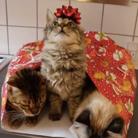 Cats Getting Wrapped Up For Christmas | Video