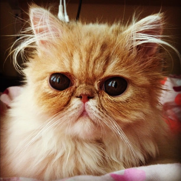Cute Smush Faced Cats Popsugar Pets Photo 16