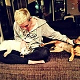 Miley Cyrus cuddled with her pups. Source: Twitter user MileyCyrus