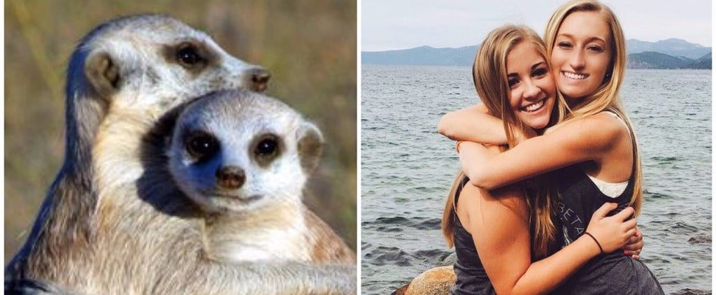 Are Meerkats the Sorority Sisters of the Animal Kingdom? The Internet Thinks So
