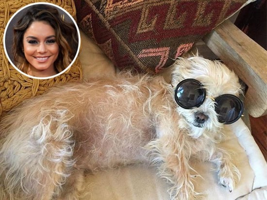 Celebs at Home: Vanessa Hudgens, Sarah Jessica Parker, Olivia Munn and More!