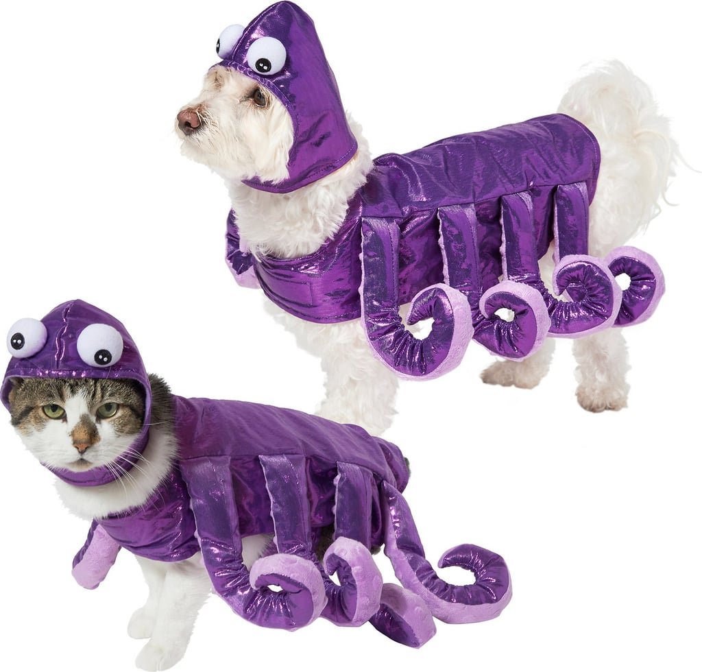 Best Cat and Dog Costumes From Chewy