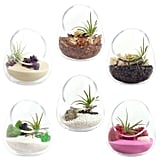 Zen Gem Cut Glass Terrarium
