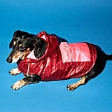 Ware of the Dog Colorblock Dog Puffer Coat